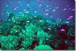 coral_reef_1