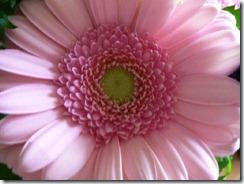 pink-flower-1